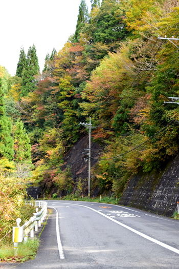 Colored leaves of 30 years, rakankyo